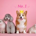 ソフトバンクエアーの代理店おすすめNO.1☆NEXTは評判◎